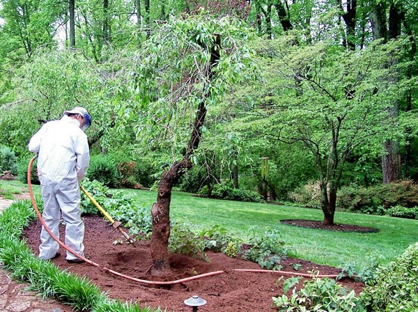 arborist performing root extraction on tree
