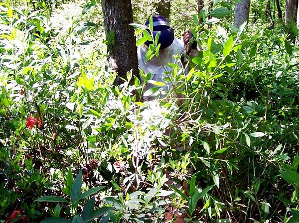 an arborist working in a sensitive area