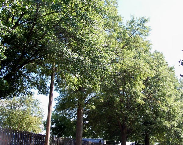 three years after arborist services