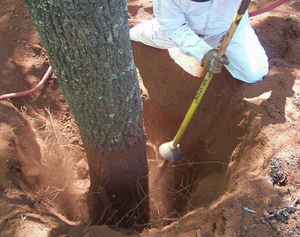 tree buried too deep