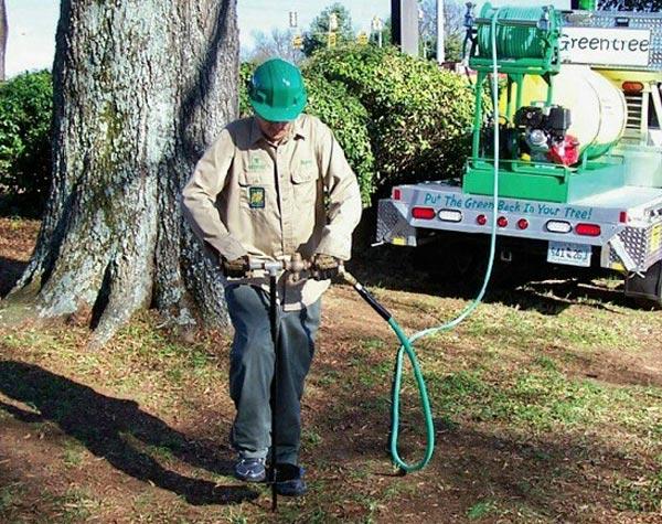 an arborist fertilizing a water oak