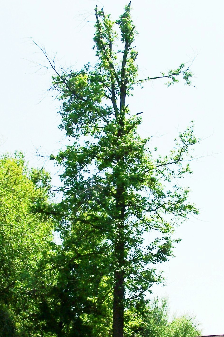 Before & After | Greentree Tree Services