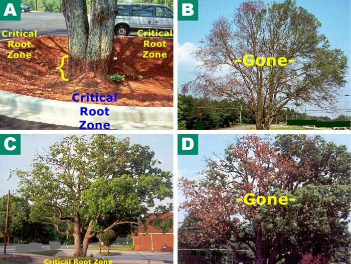 root zone diagram