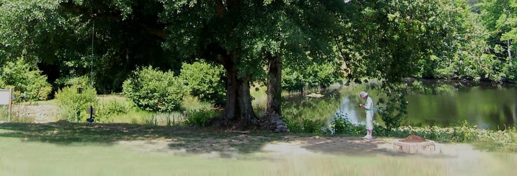 Put the green back in your trees! - Arborist - Upstate, SC Greentree Tree Services