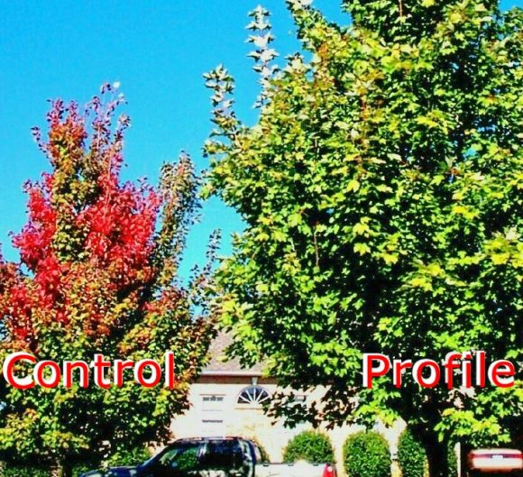 Restoring Green to Trees and Tree Owners in SC and Beyond - Before & After Greentree Tree Services