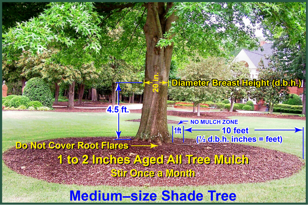 Mulching Healthy Trees Greentree Tree Services