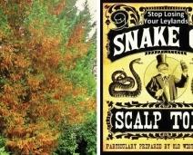 Leyland Cypress & Snake Oil Salesmen