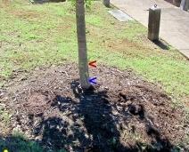 Subpar Planting & Excessive Mulching