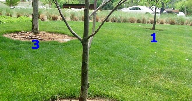 Subpar Planting & the Loss of a Chestnut