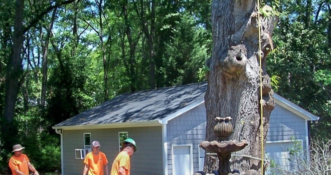 Ode to the Tree Cutting Man